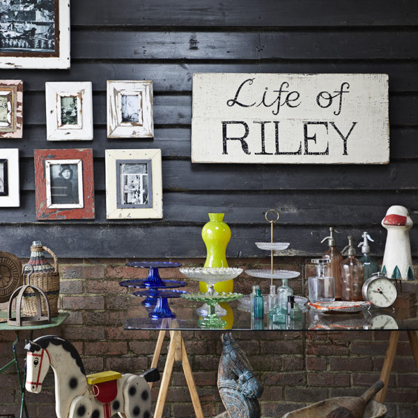 Spotlight On Life of Riley