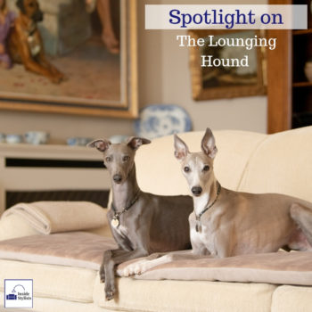 Spotlight on The Lounging Hound - Inside Stylists