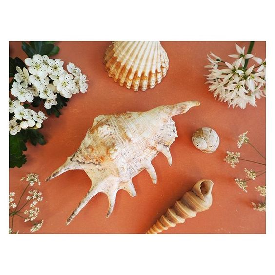 The secret styling tip for adding personality to your home that you need to know! Flat lay of beach shells on a coral background