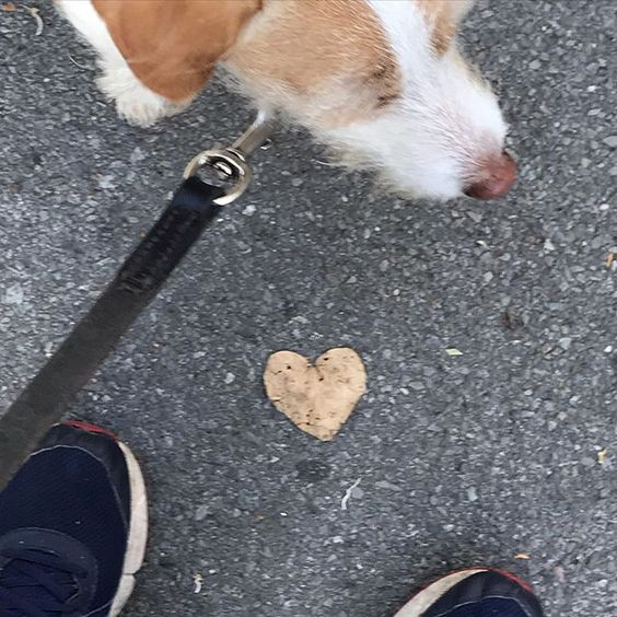 How to stay positive online in 2020. Dog with a heart shaped leaf.