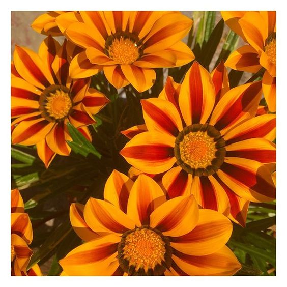 How to stay positive online in 2020. Close up of some orange flowers.