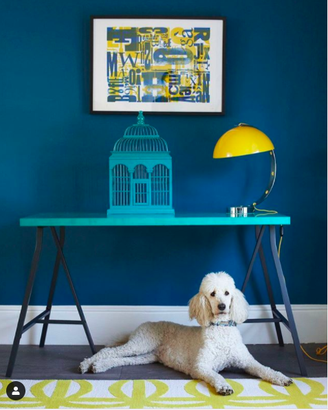 Colourful interior image featuring a blue trestle table against a blue wall with a bright yellow lamp and dog.