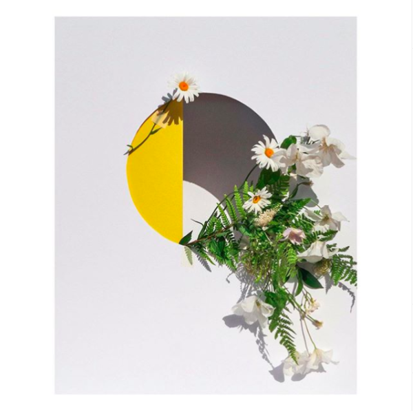 Abstract flat lay styling of some wild flowers inside a hole with yellow card