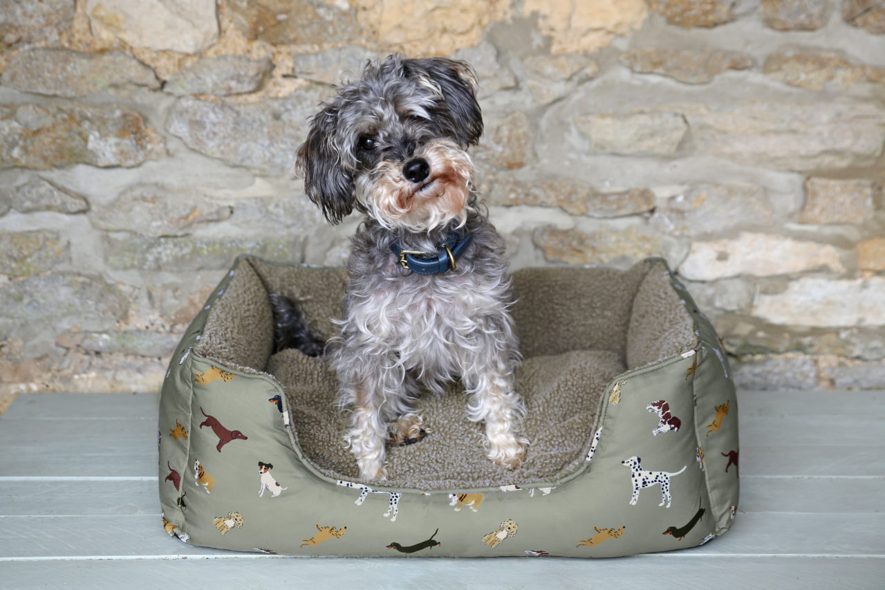Dog beds you'll want to treat your pooch to,
